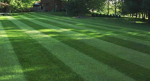 Van Nuys lawn care services